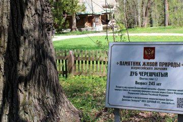 Приглашаем  14 октября на высадку дубовой аллеи
