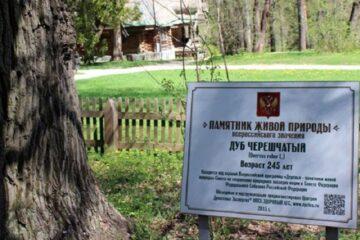 Аллею из 32 саженцев дуба высадили эковолонтеры около знаменитого 250-летнего дуба во Всеволжском районе