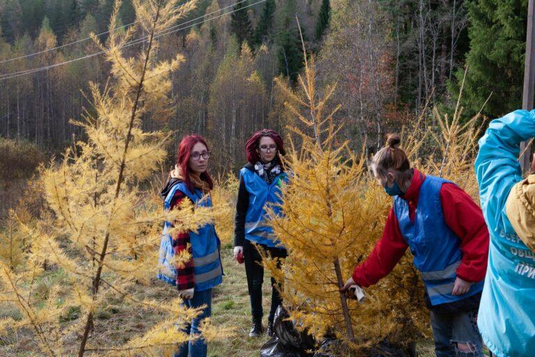 """150 молодых лиственниц высадили эковолонтеры в """"Линдуловской роще"""""""