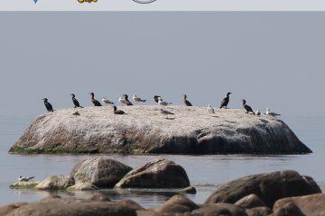 Птицы мигрируют