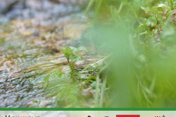 Маршрут «Радоновые озера»: здесь концентрация радона в 9 раз превышает концентрацию радоновых источников в Грузии