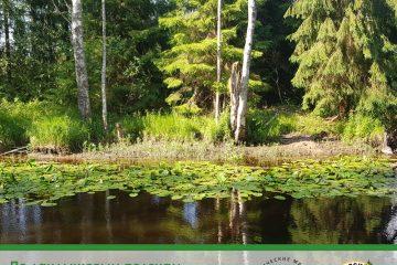 По ландышевым полянам и вдоль реки: в ООПТ «Гладышевский» откроют красивый турмаршрут